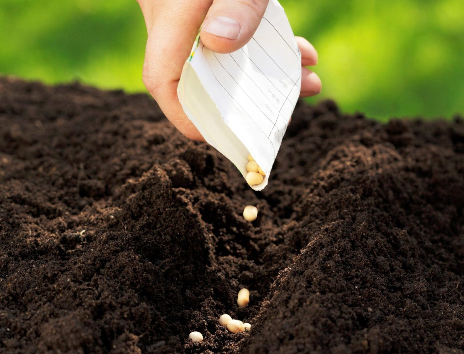 An example of planting seeds in a furrow.