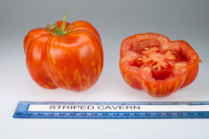 Photo of a Striped Cavern tomato showing it whole and cut in half. The tomato is red with yellow stripes