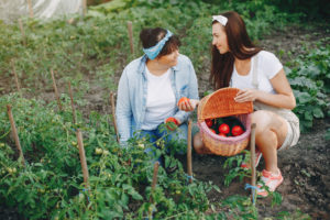 A mother and her adult daughter harvest tomatos.