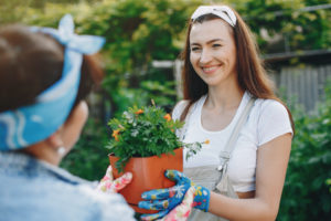 Smiling adult daughter gives her mother a marigold start to transplant in their garden.