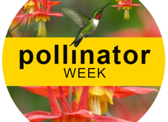 Photo of a hummingbird with text that says Pollinator Week June 21through 27, 2021 Pollinator.org